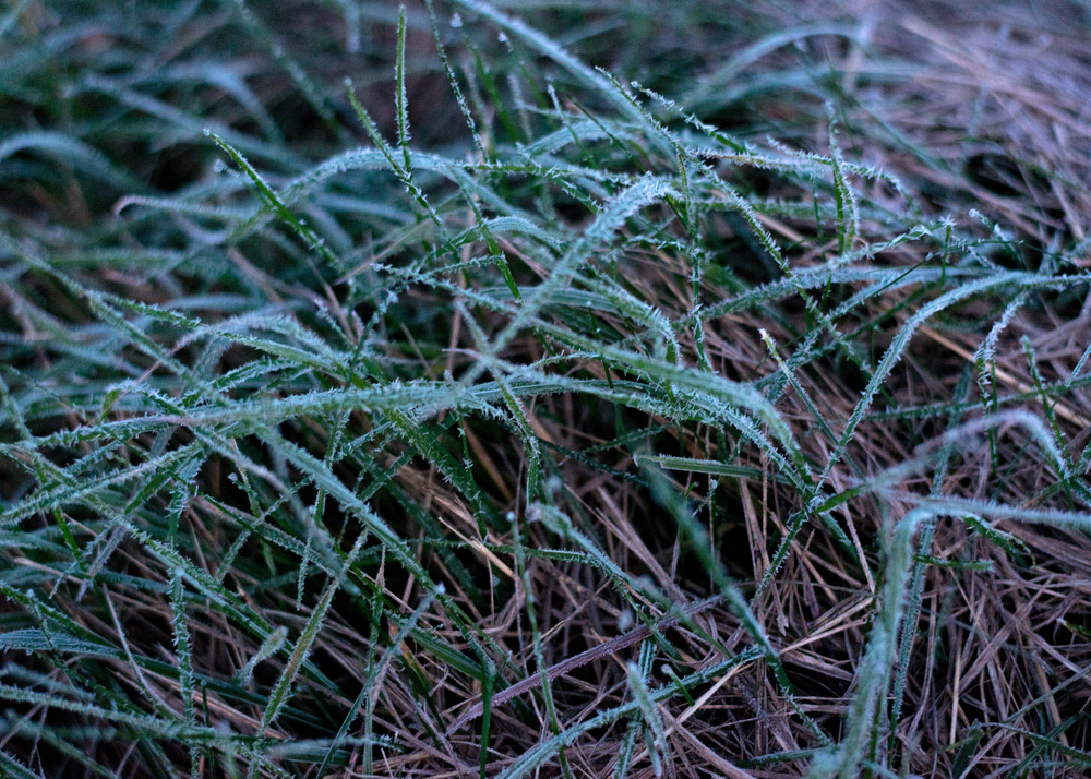 WinterHillStudio Frosty Grass in Meadow.jpg