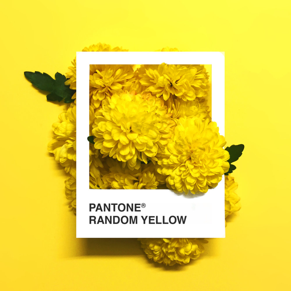 RandomYellow.jpg