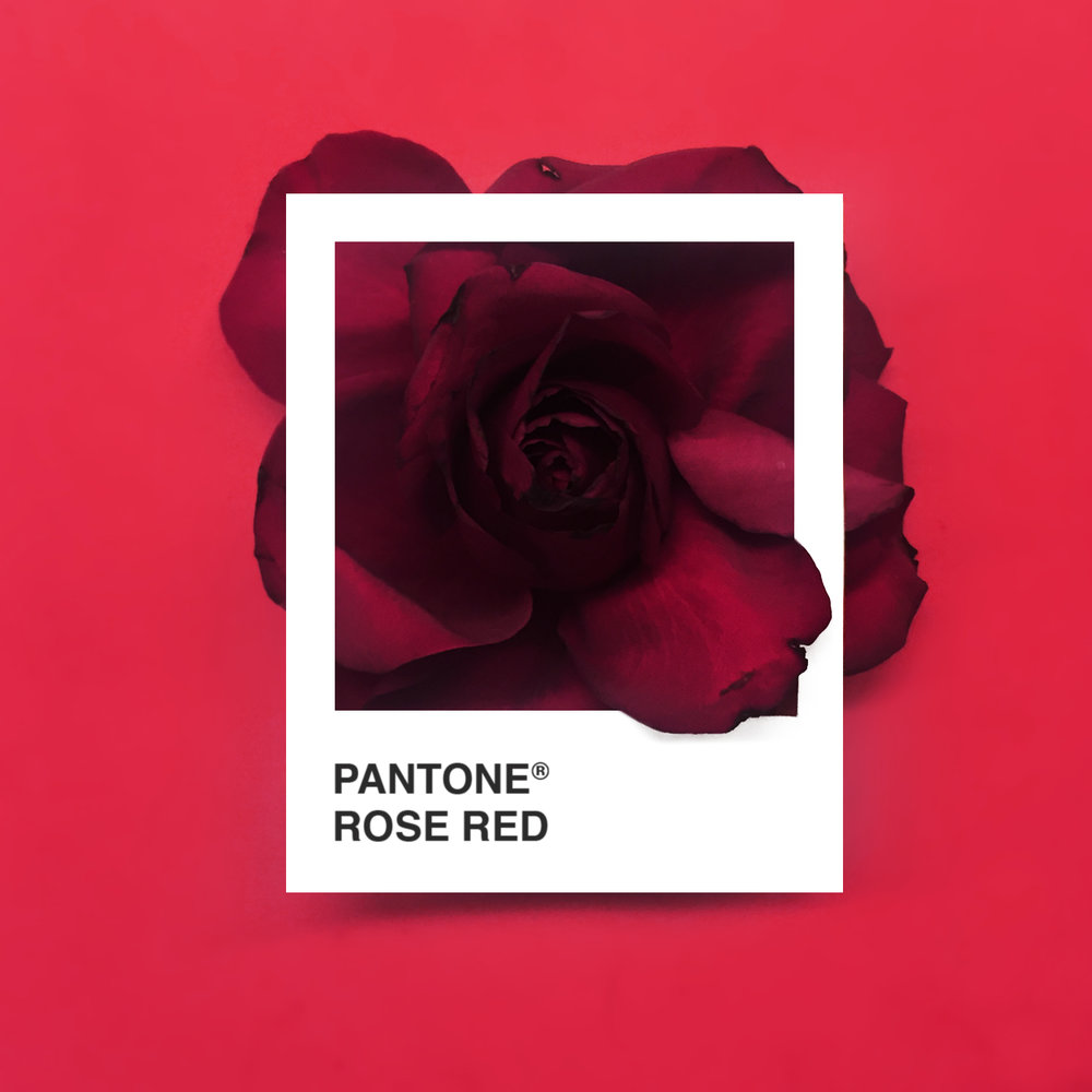 RoseRed.jpg