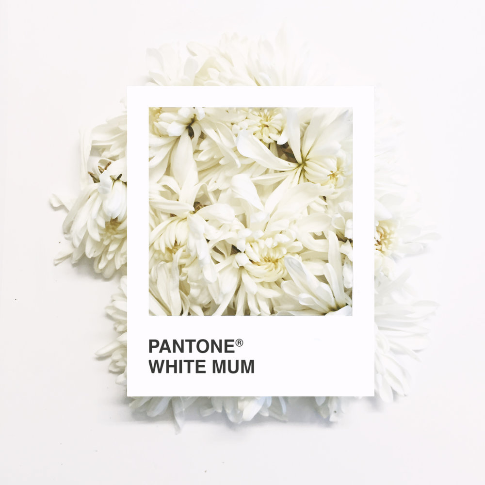 WhiteMum.jpg
