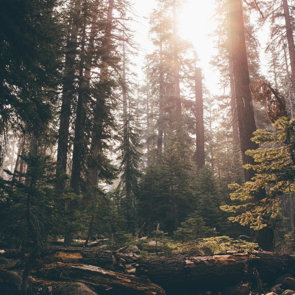 Sequoia-8.jpg