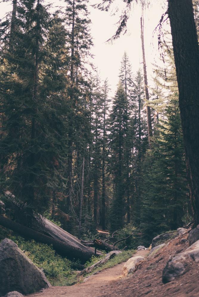 Debra Alison Yosemite Adventurous Elopement-551.jpg
