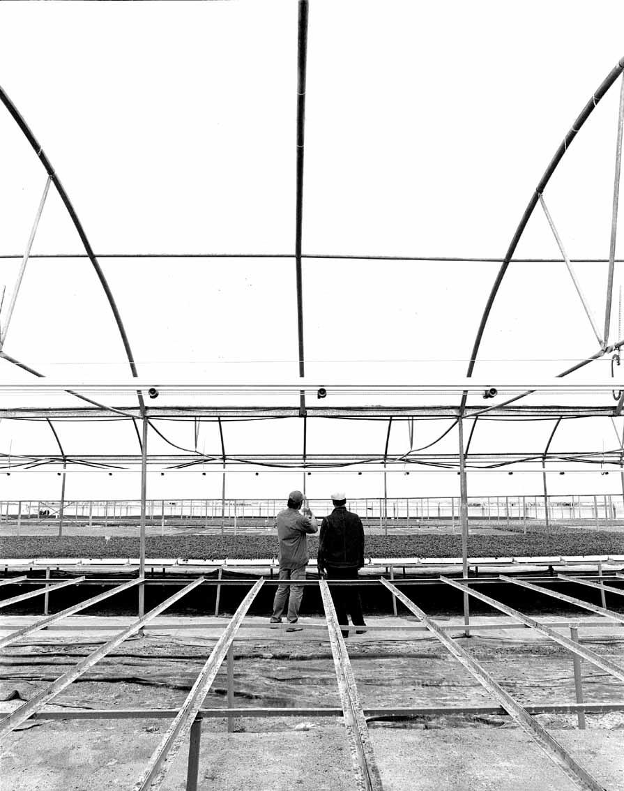 Repsol Invernadero Y&R.jpg