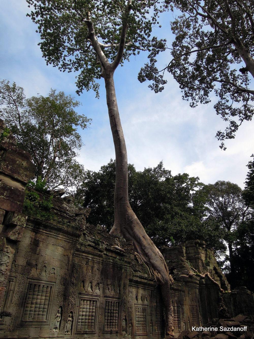 Ruins of Angkor (Ta Prohm), Cambodia