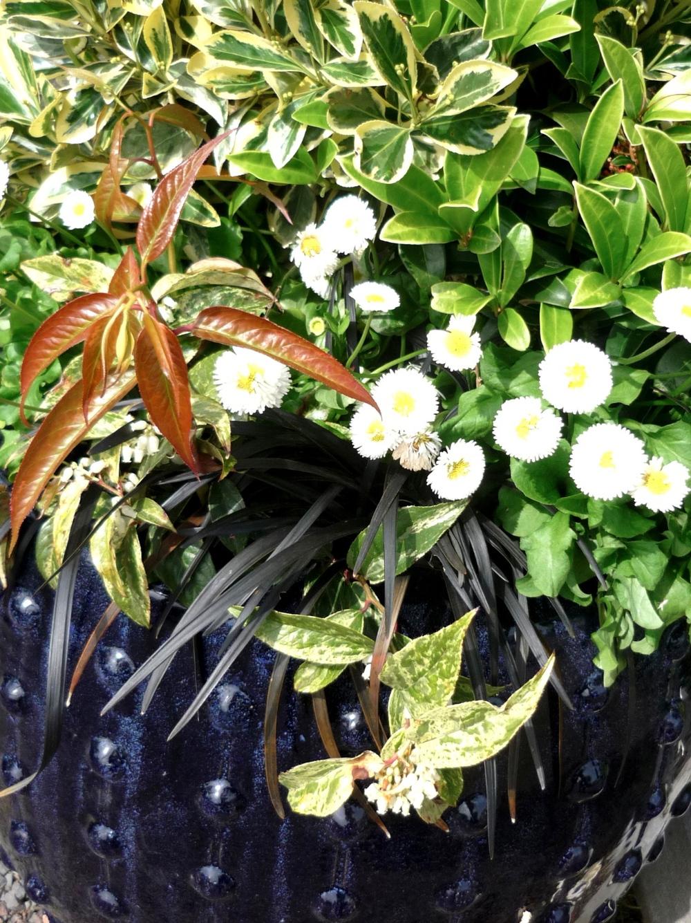 planter-2.jpg