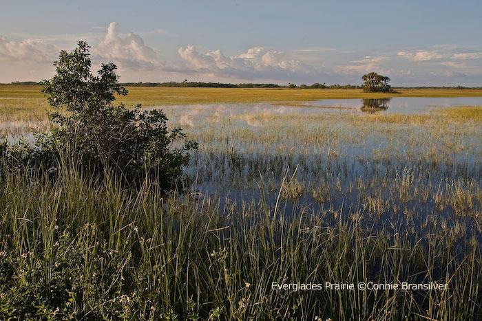 evergladesprairie-conniebransilver.jpg