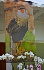 Endangered Species Banner of Crested Caracara at Audubon Gala ©Connie Bransilver