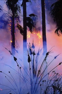 Wildfire in the Swamps ©Connie Bransilver