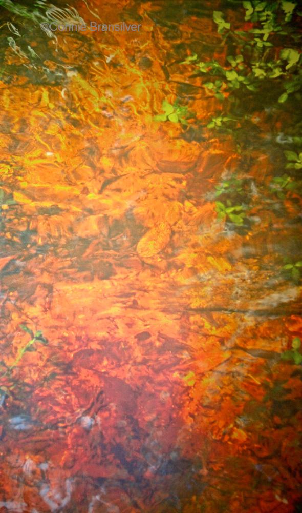 Clear & Fresh Swamp Water