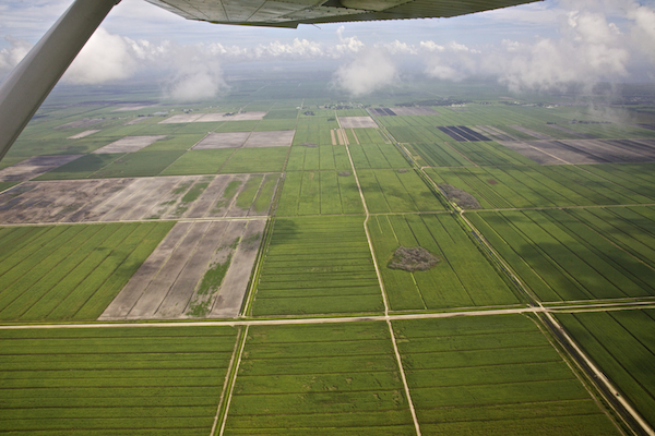 Miles and miles of sugar south of Lake Okeechobee, in the line of historic Everglades water flows from the lake.  ©Connie Bransilver