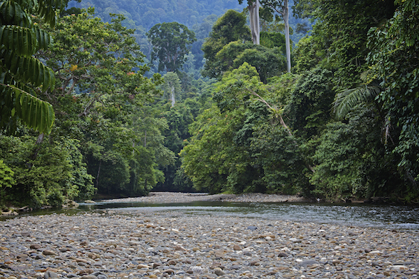Gunung Leuser National Park, Sumatra ©Connie Bransilver
