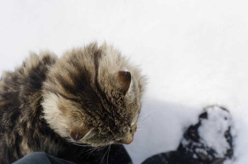 cats-20.jpg