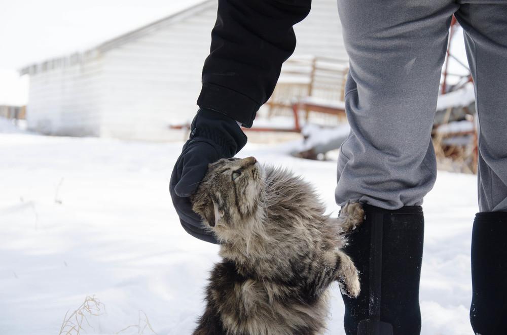 cats-24.jpg