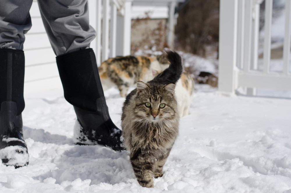 cats-33.jpg