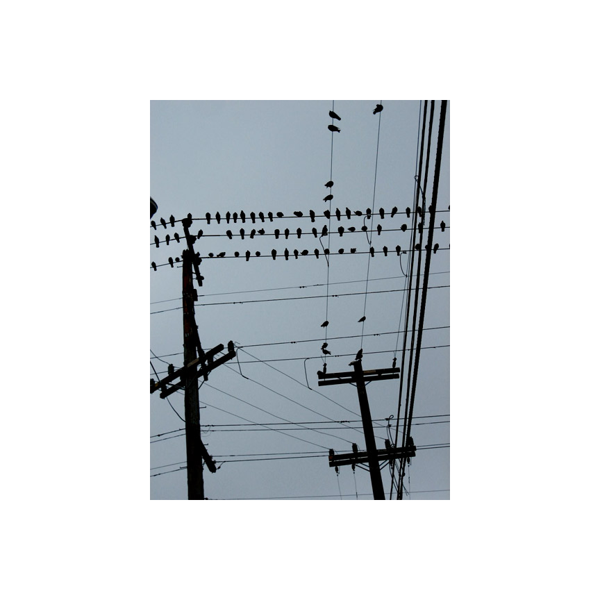 Bird(s) on a wire