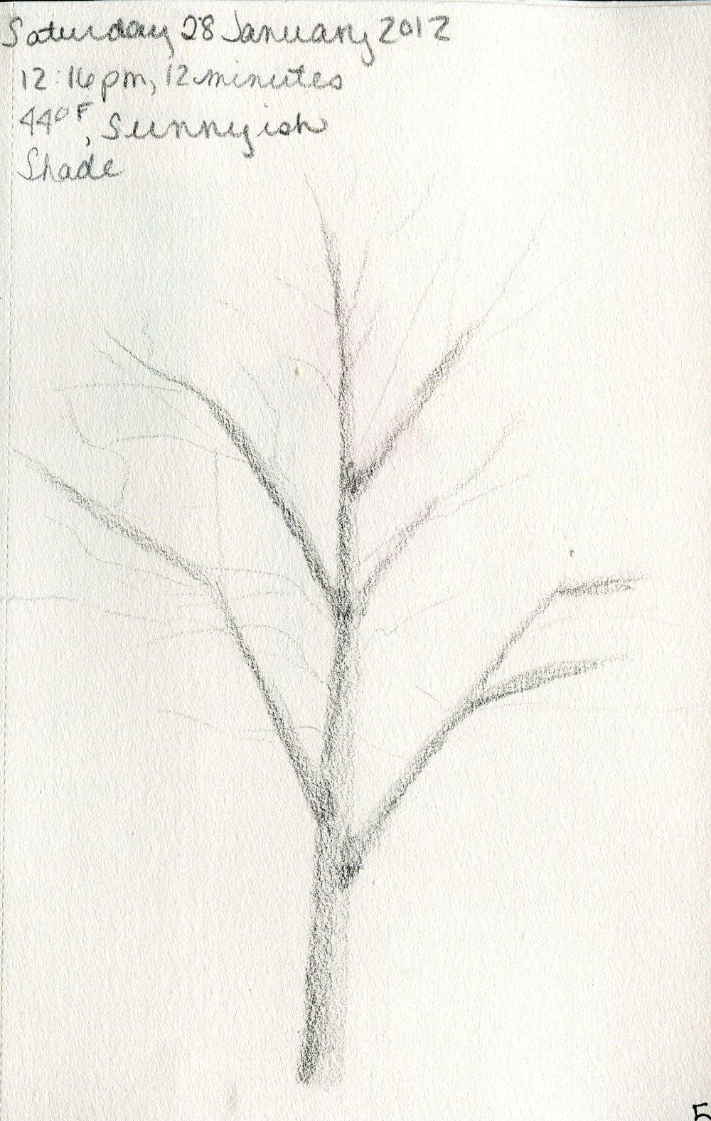 Tree 006.jpg