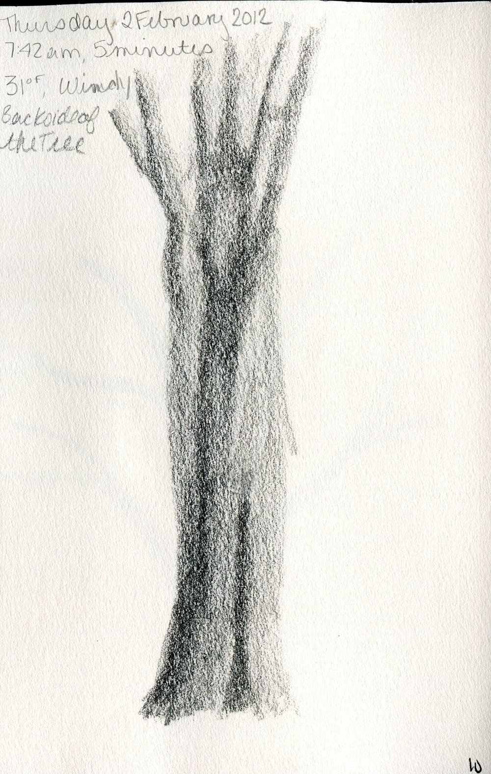 Tree 011.jpg