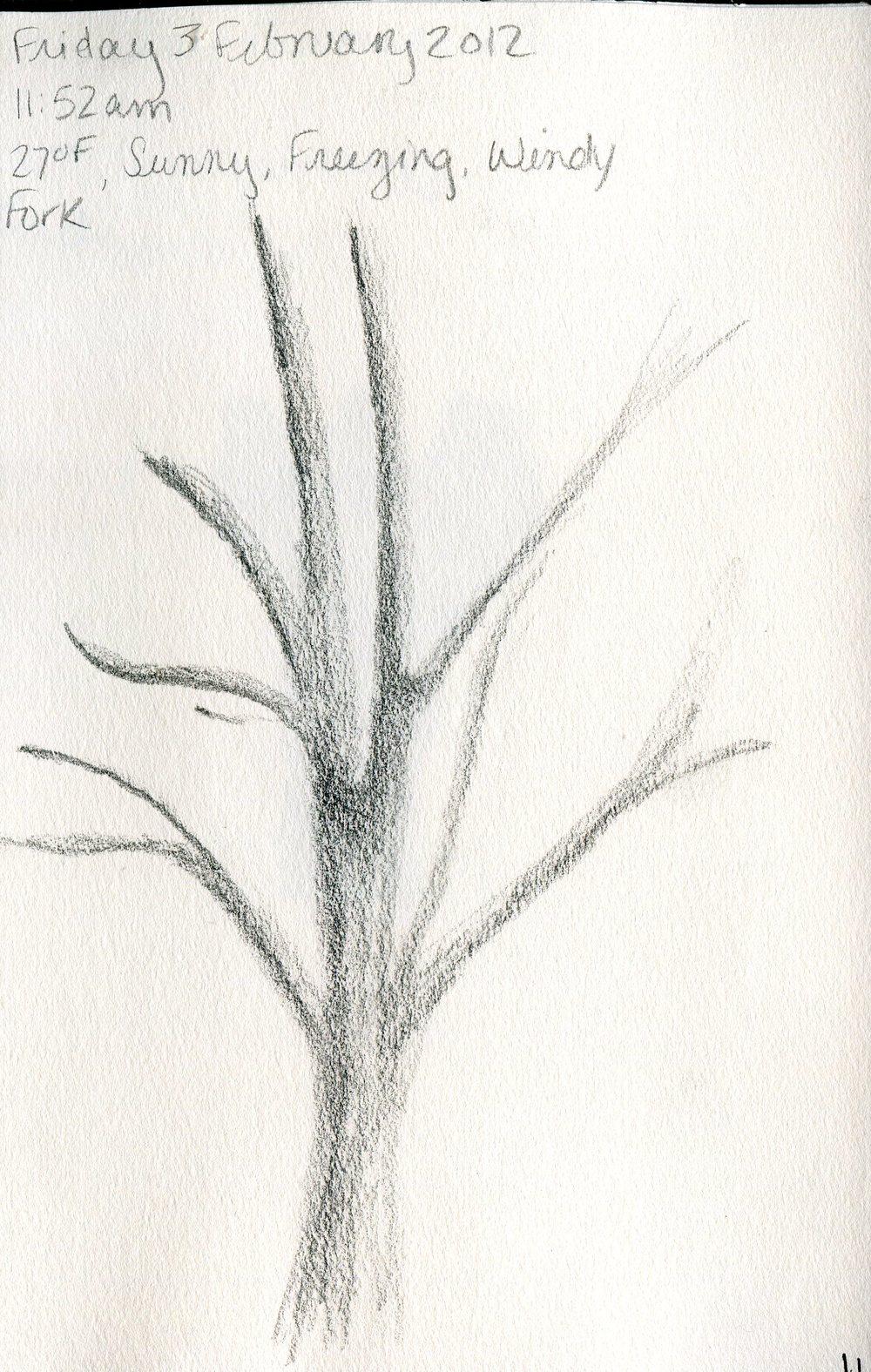 Tree 012.jpg