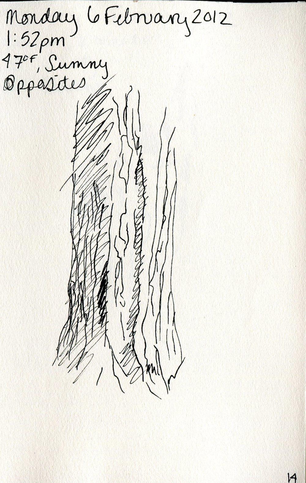 Tree 015.jpg
