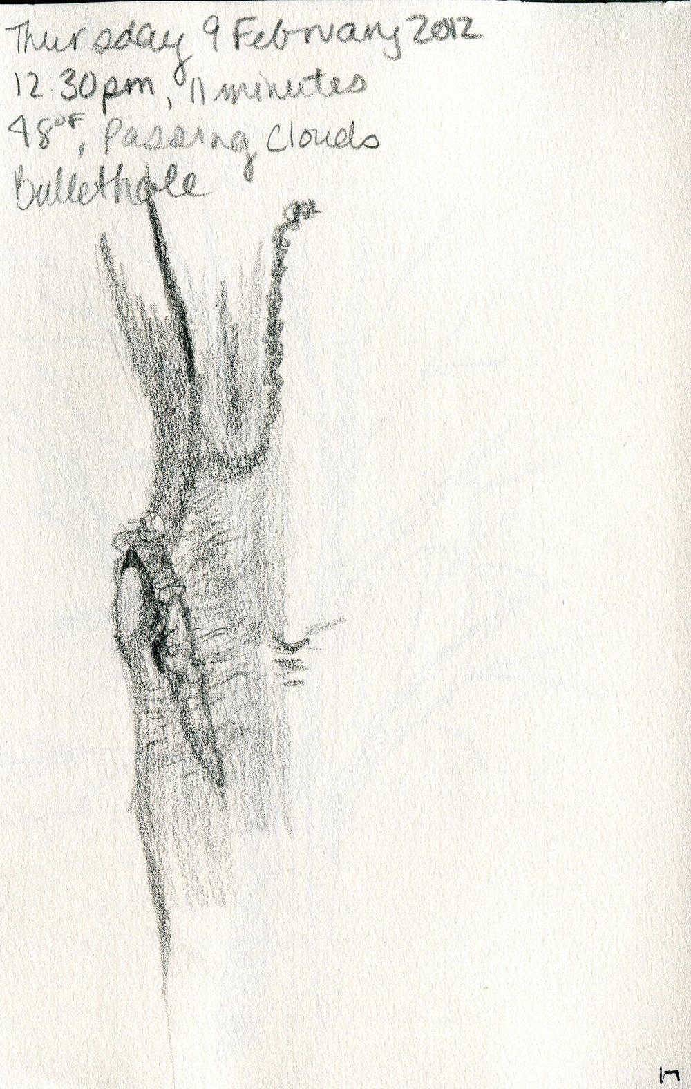 Tree 018.jpg
