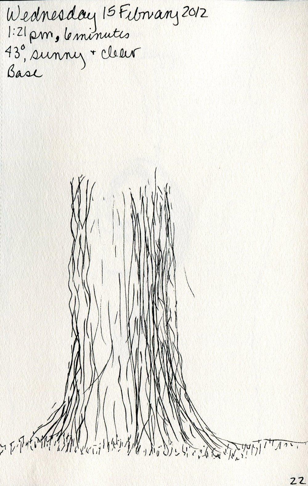 Tree 023.jpg