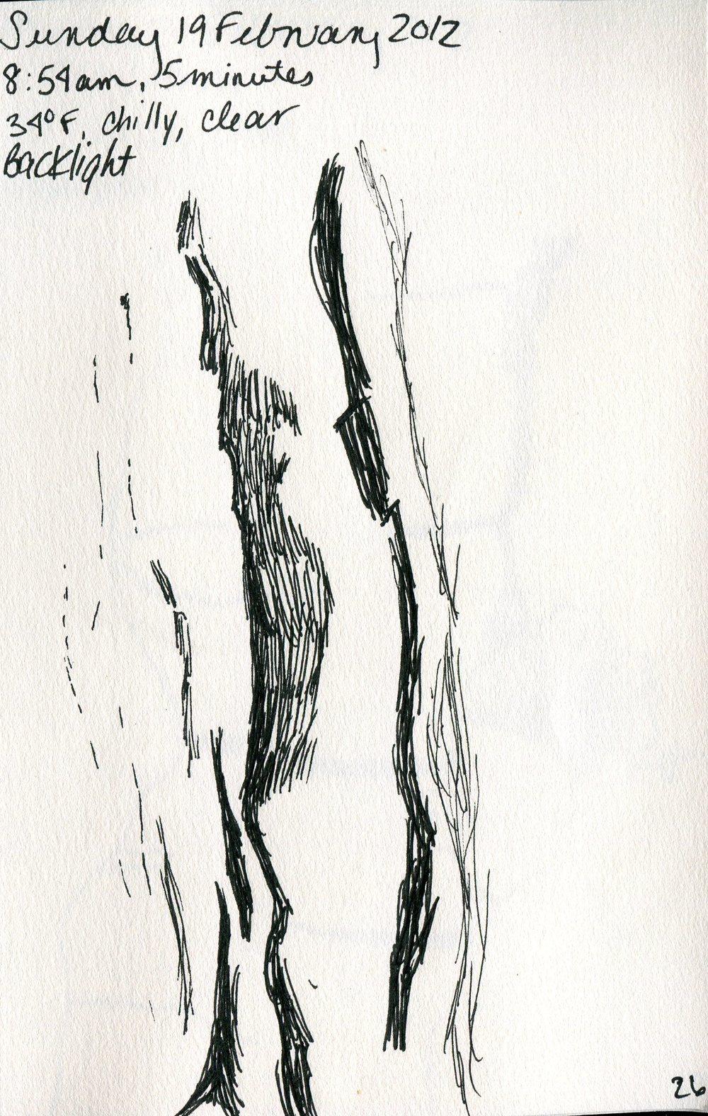 Tree 027.jpg