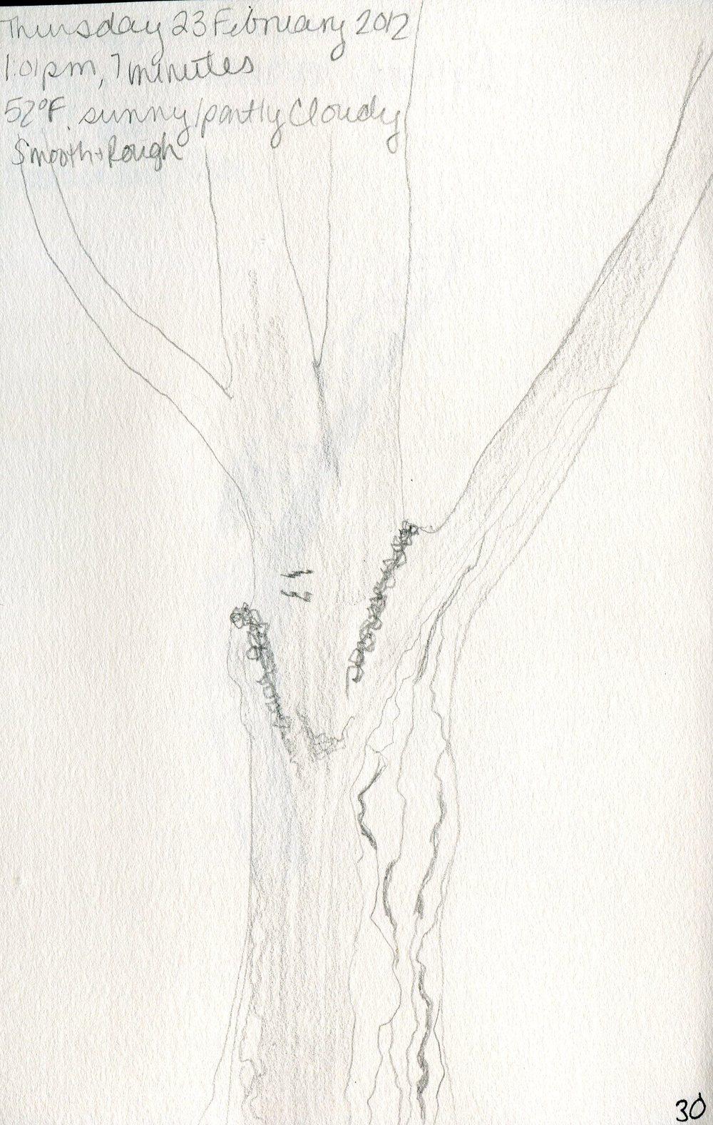 Tree 031.jpg
