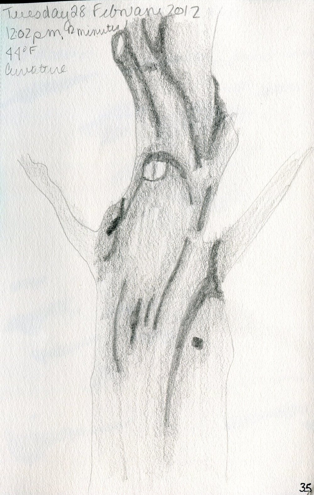 Tree 036.jpg