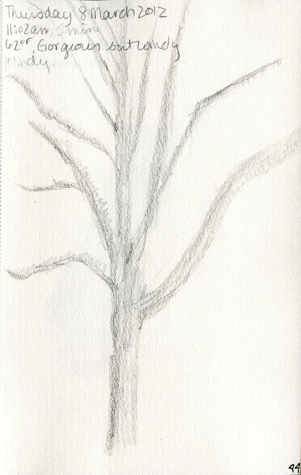 Tree 045.jpg