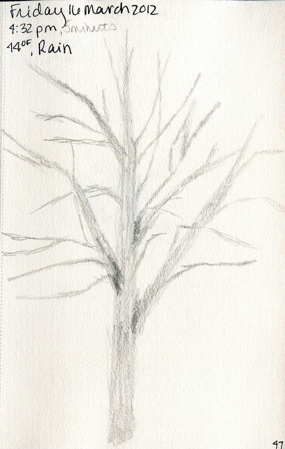 Tree 048.jpg