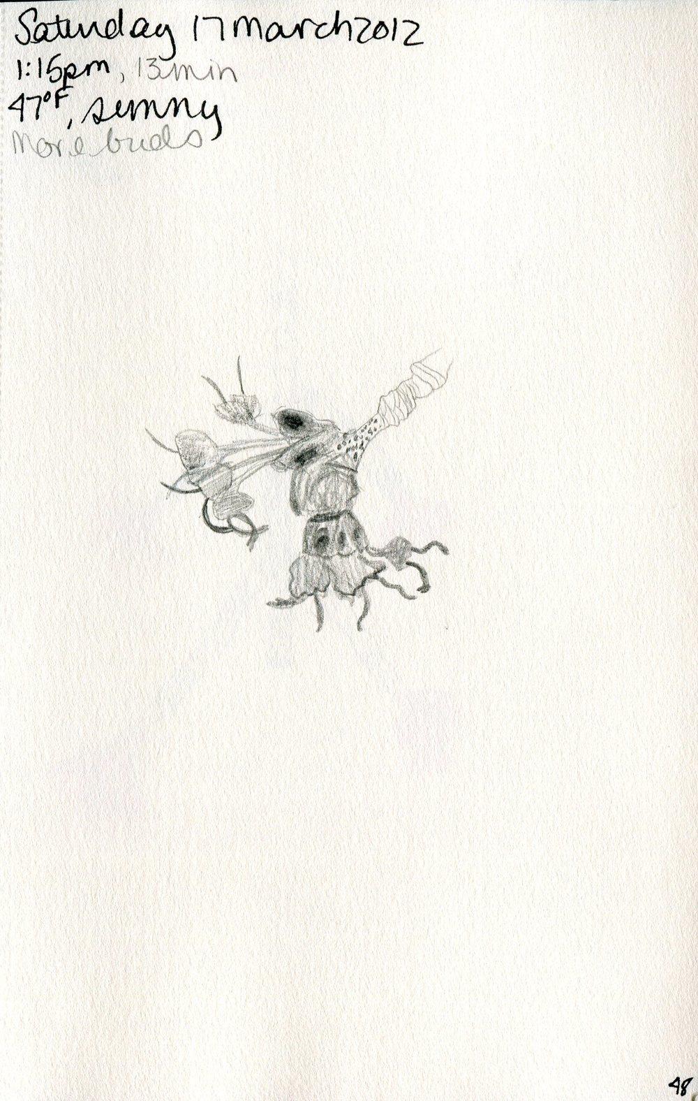 Tree 049.jpg