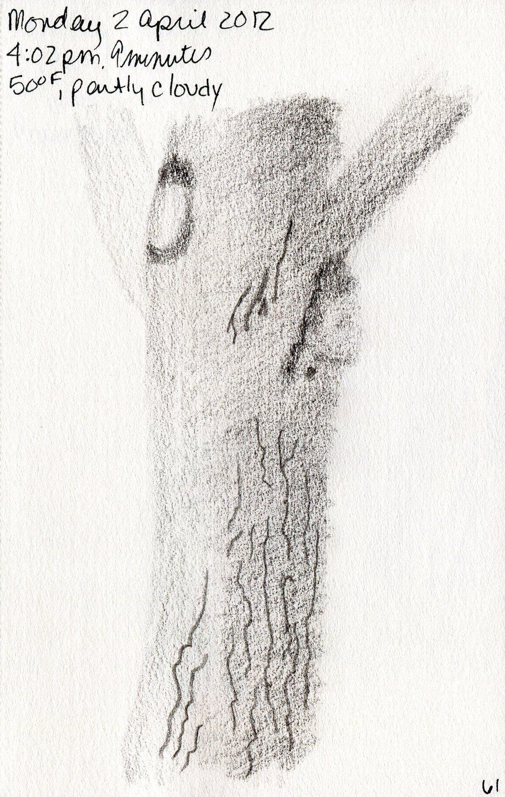 Tree 062.jpg