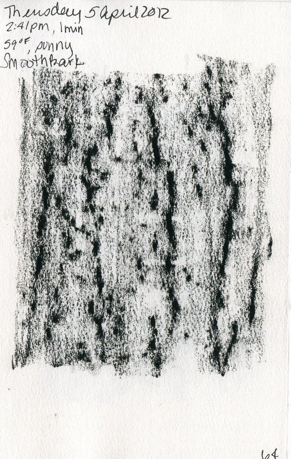 Tree 065.jpg