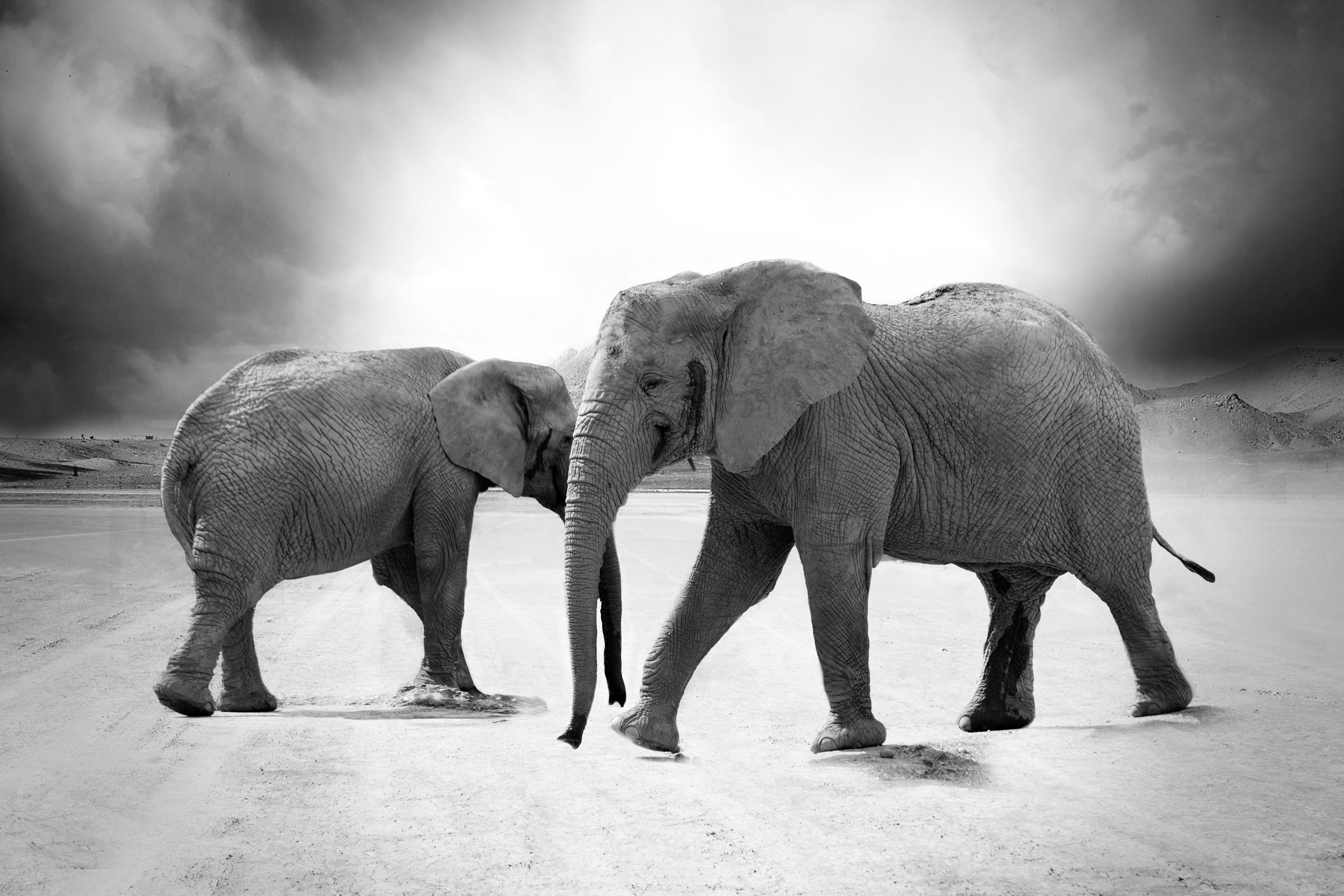 When It Comes To Housing Affordability There S An Elephant In The Room