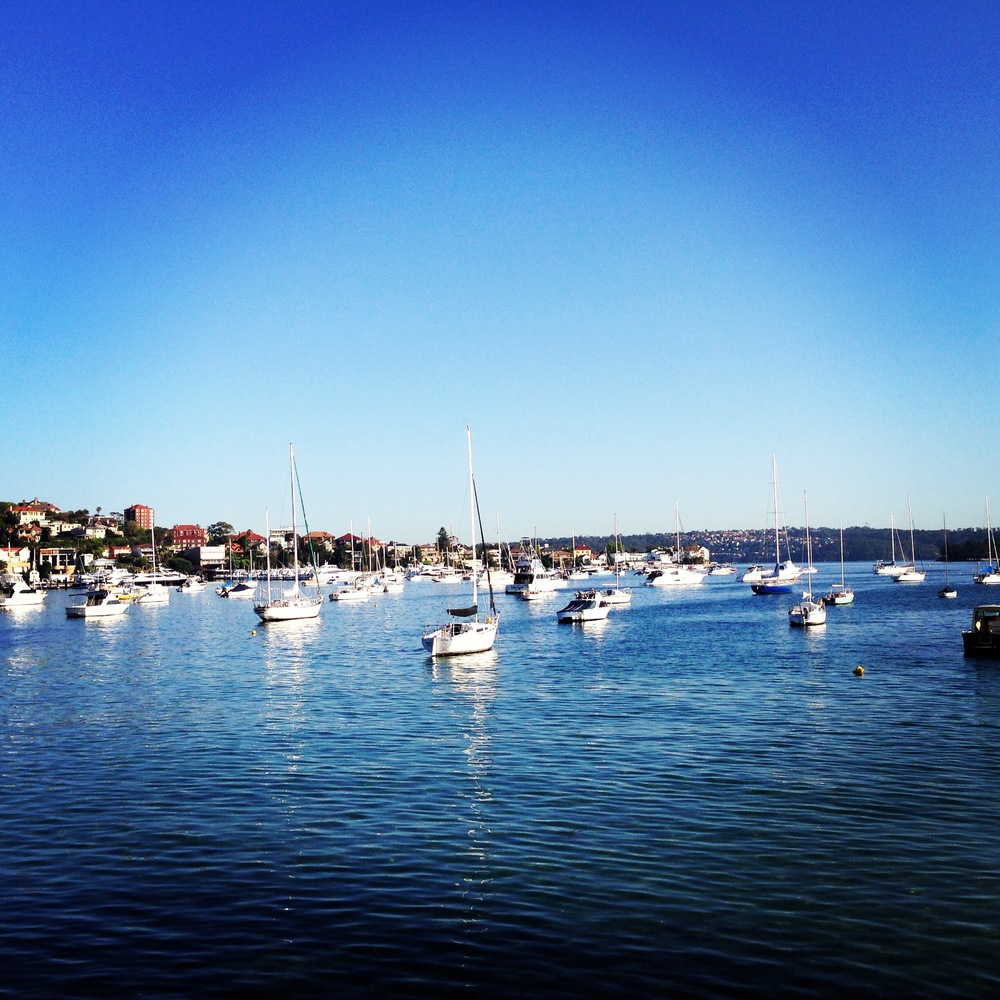 Morning in Rose Bay