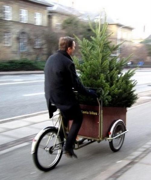 christmas-tree-organic.jpeg