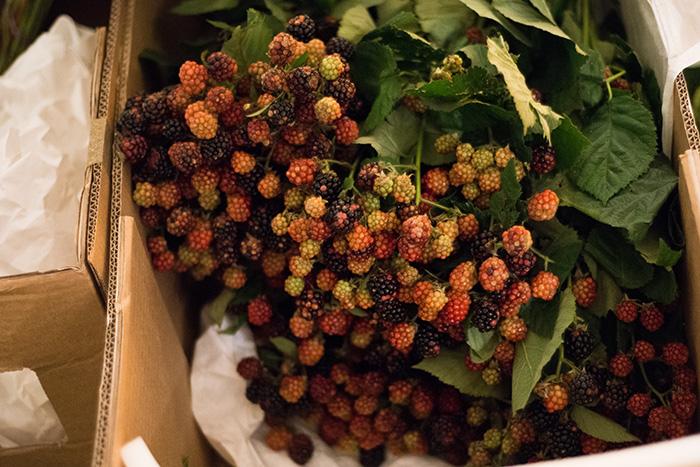 Rubus berry