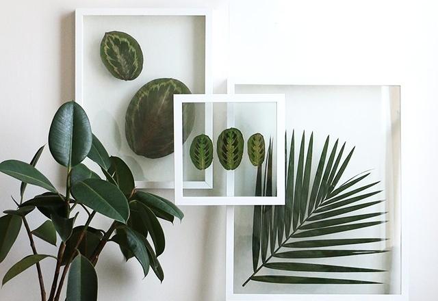 Pressed-Plants-2.jpg