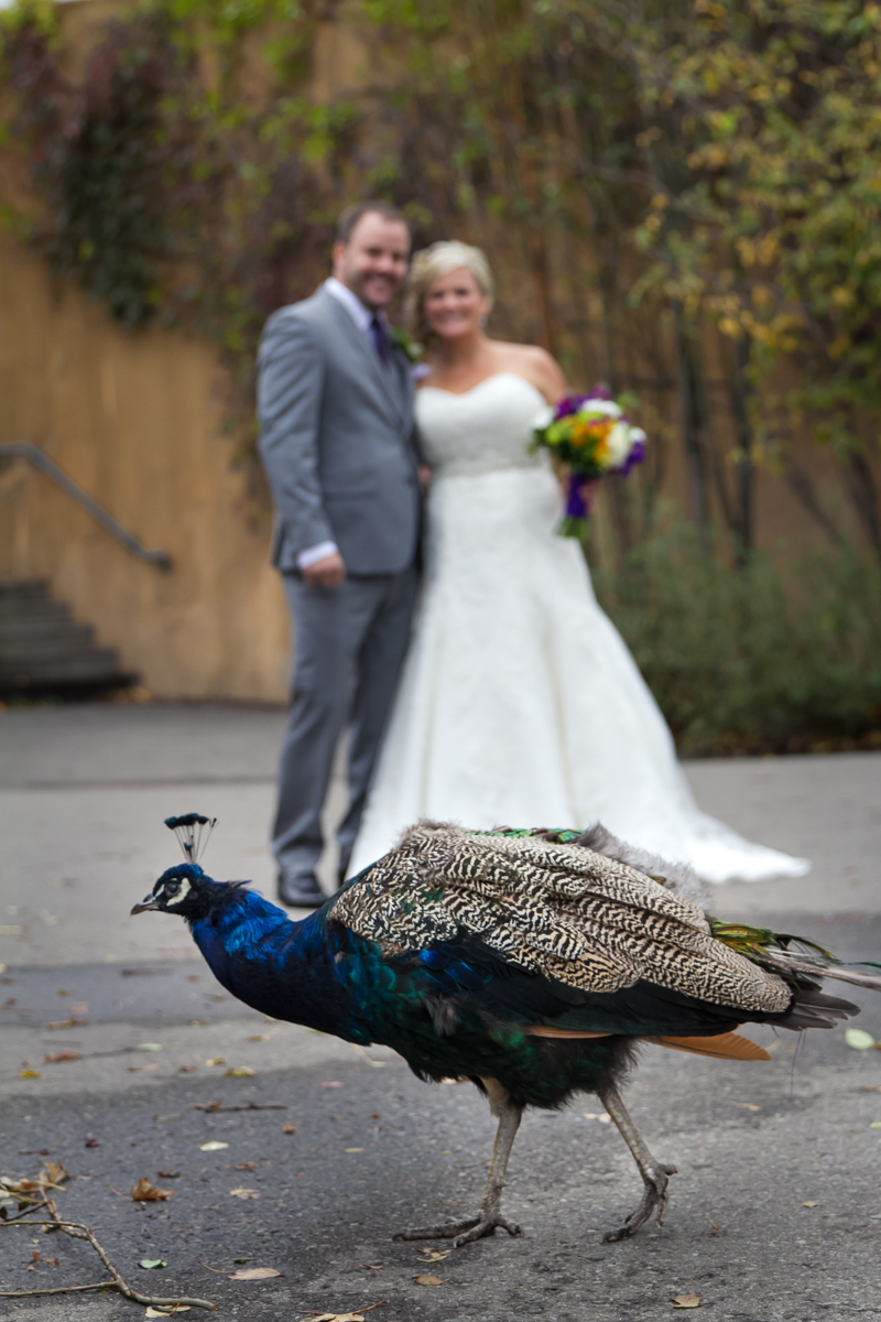 Curtis+Chrissy_Wedding_Share-204.jpg
