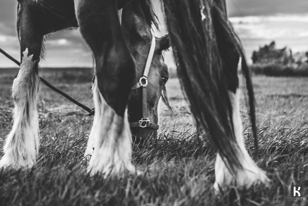 horseeating.jpg