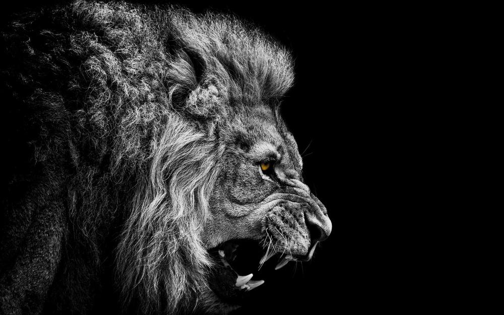 Lion-Face-HD.jpg