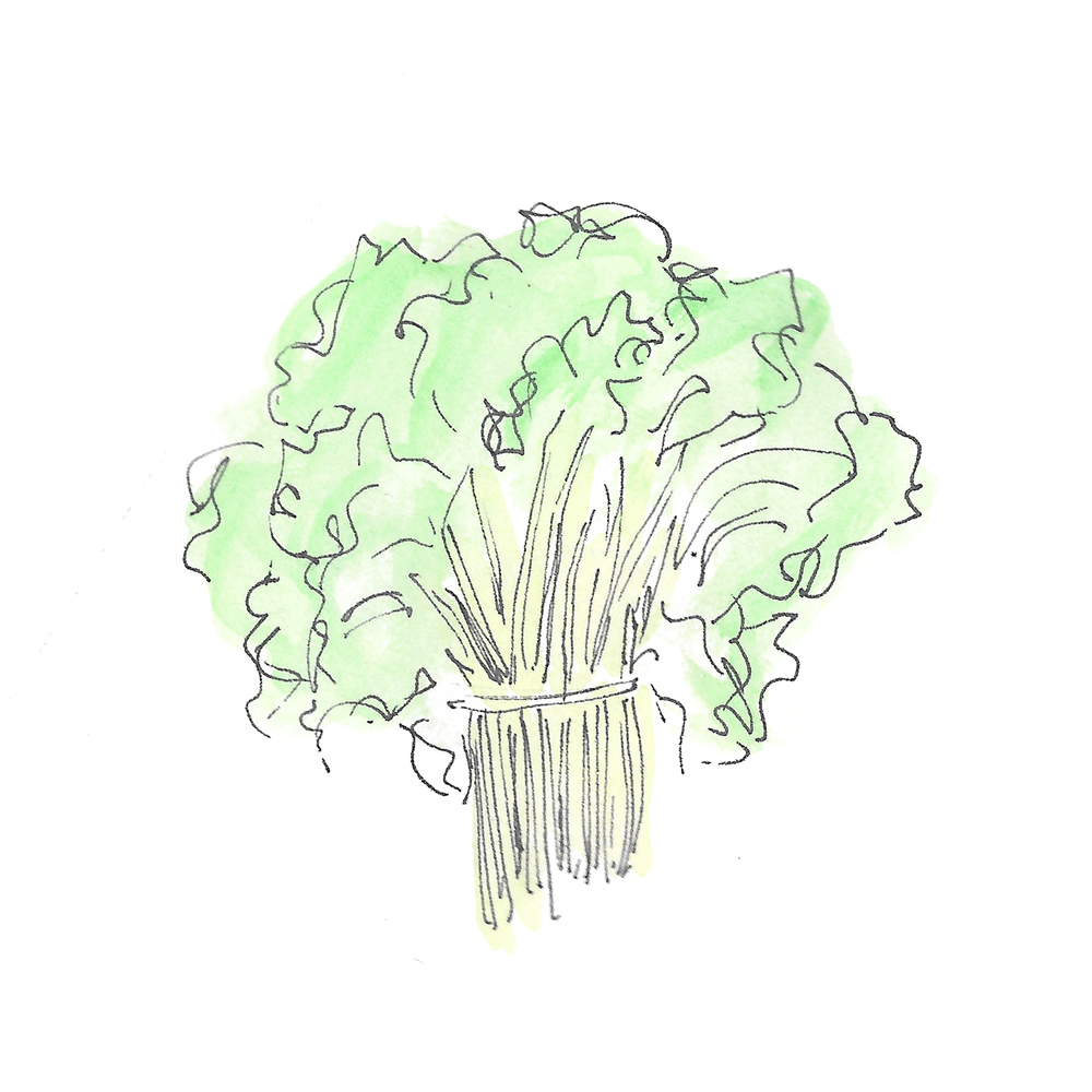 kale bunch.jpg