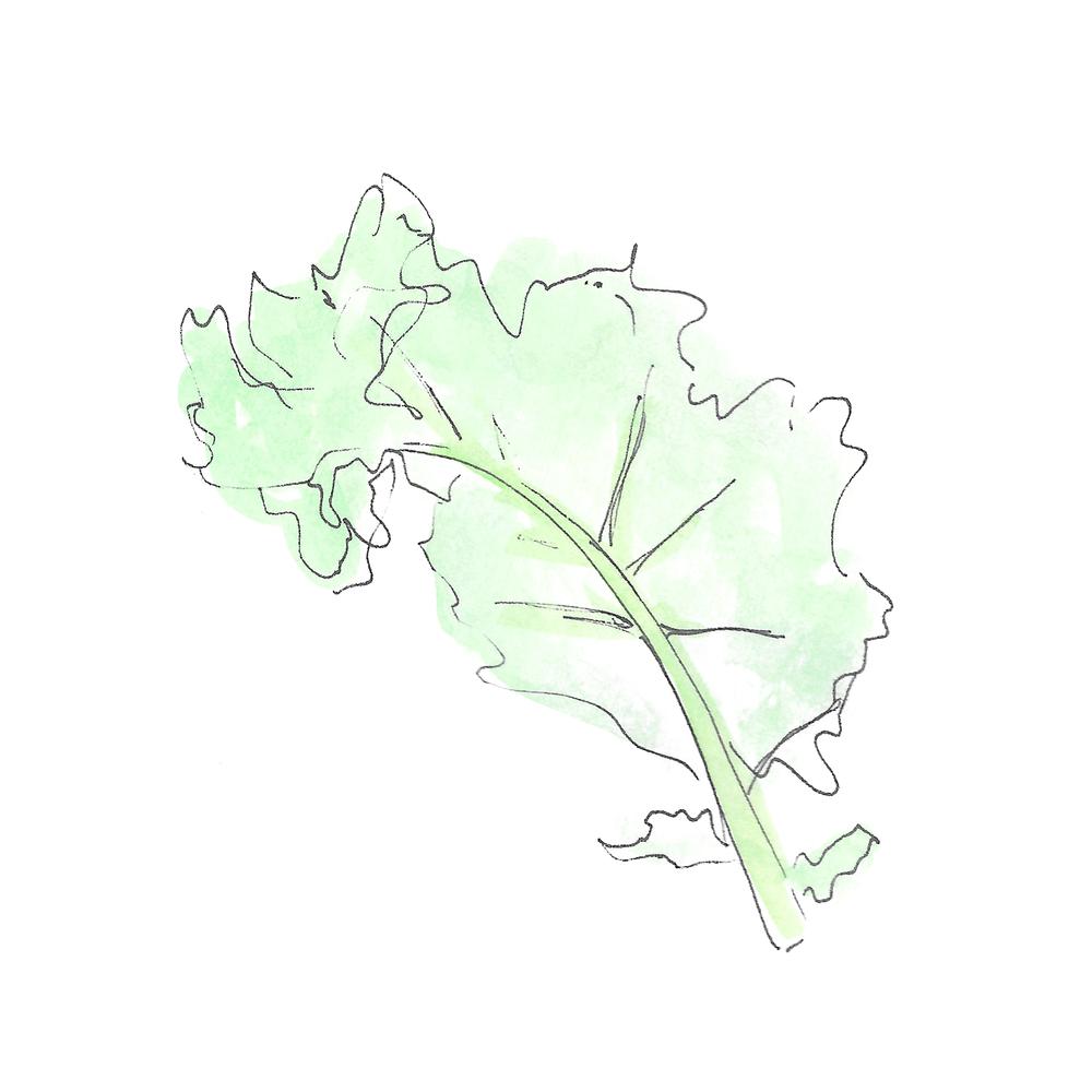kale leaf.jpg