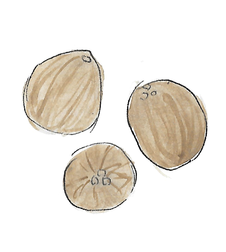 Coconuts white background.jpg