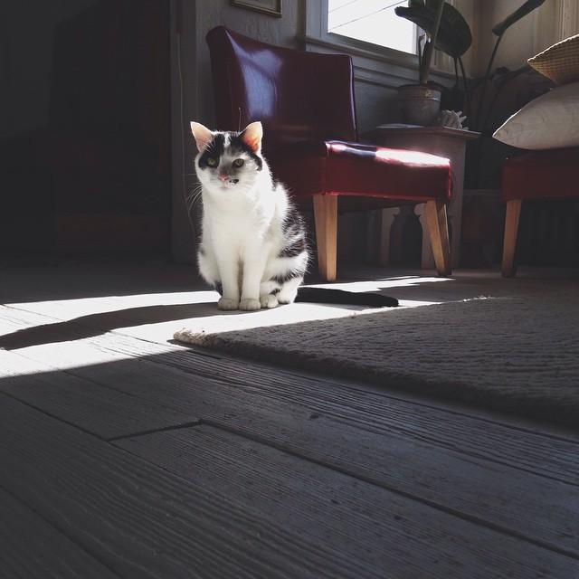 Winkie likes sunny days. Me too 😽 #kitten #cat #babycat #sunnyday