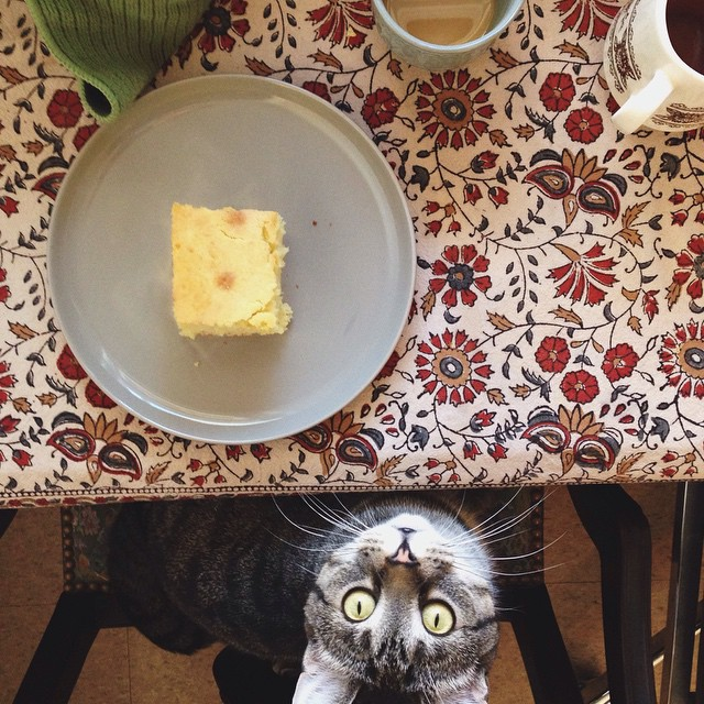 Butter and syrup, please.       #bestfriend #tinycat #missmarple #sunday #breakfast #cornbread #chemex #coffee