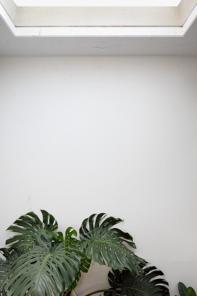 [House plants] gregorgraf: Monstera below window