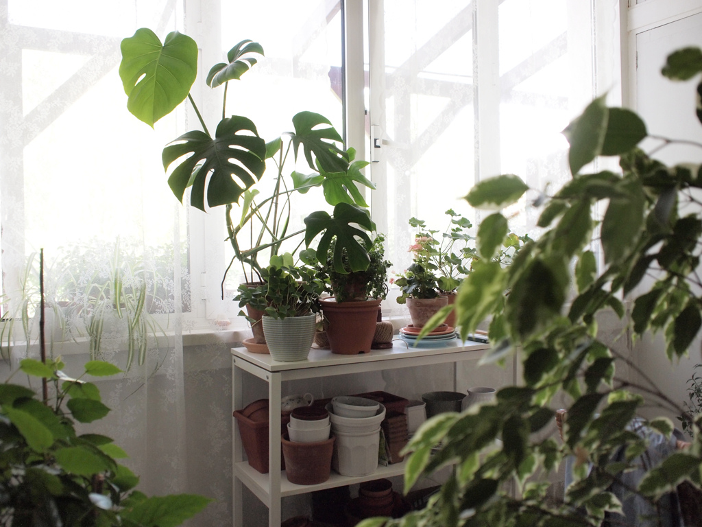 [House plants]