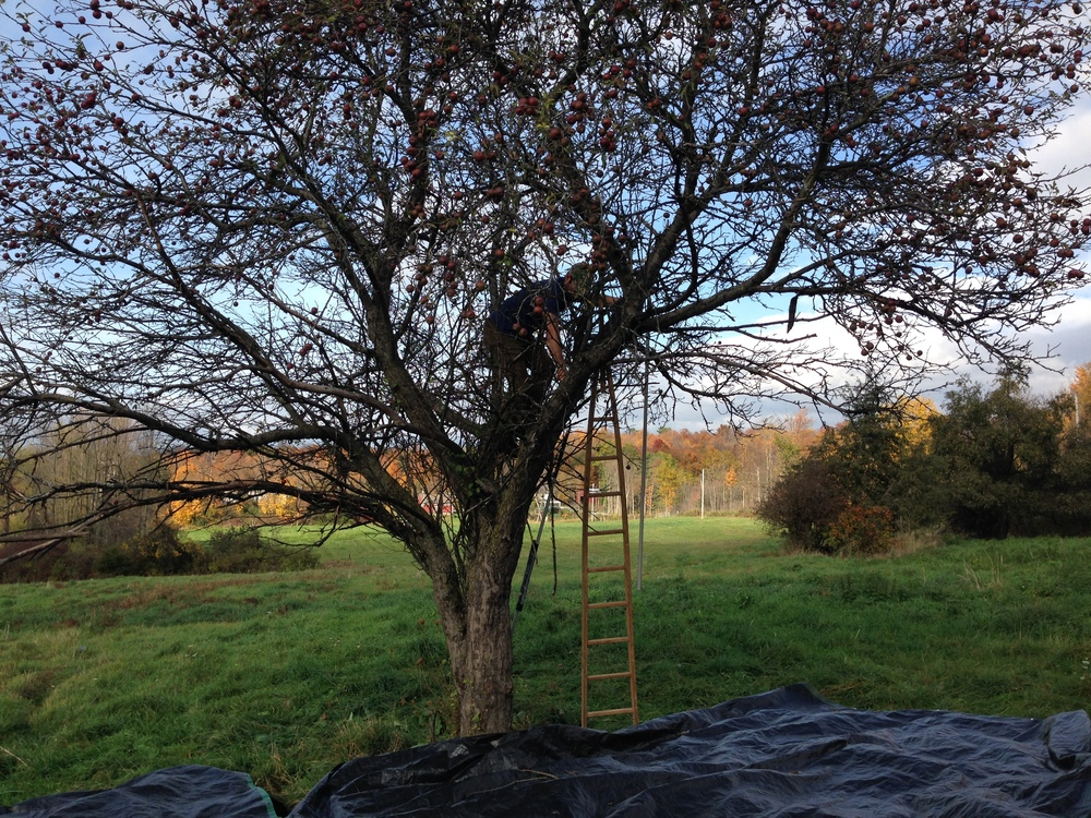 treeshaking.JPG