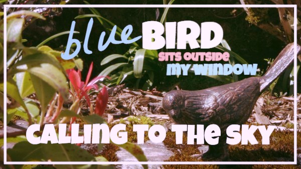Blue bird sits outside my window.jpg